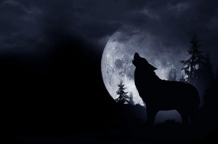 Имена вукова: 300+ дивних и дивљих имена надахнутих вуком