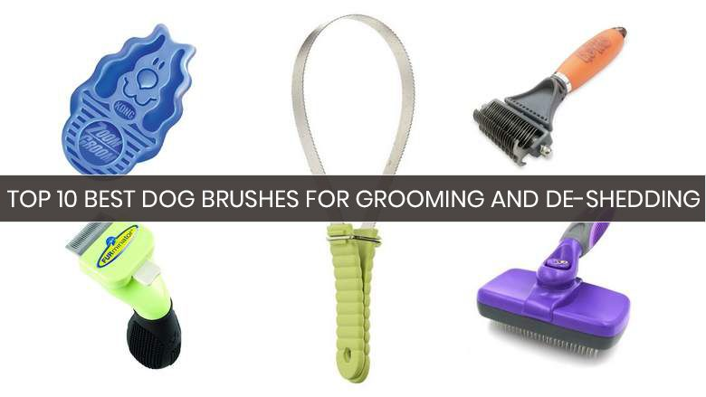 10 beste hondenuitwerpborstels: uw kopersgids