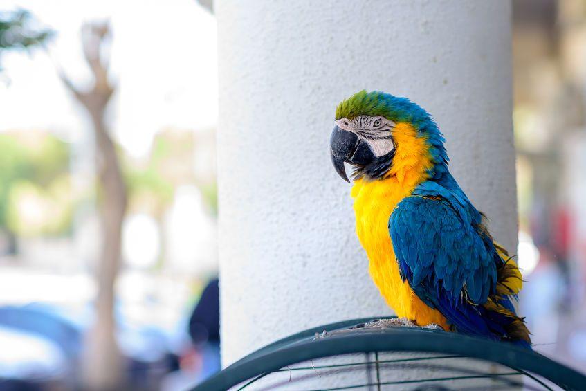 Satılık En İyi 11 Büyük Kuş Kafesi